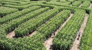 10 Awesome Corn Mazes In Kansas You Have To Do This Fall