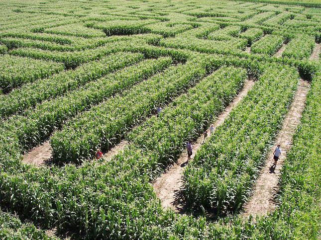 5. Bergmann Corn Maze (Haysville)