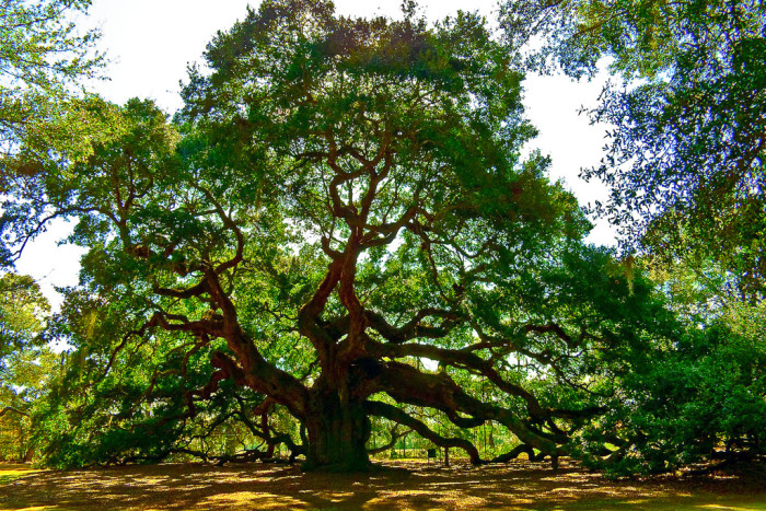 12. You wouldn't be able to see the most amazing Angel Oak or...