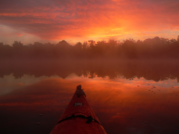 9. The Great Dismal Swamp