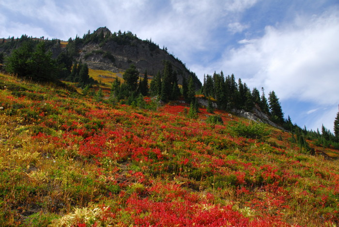 6. View some spectacular fall foliage along the Naches Peak Loop.
