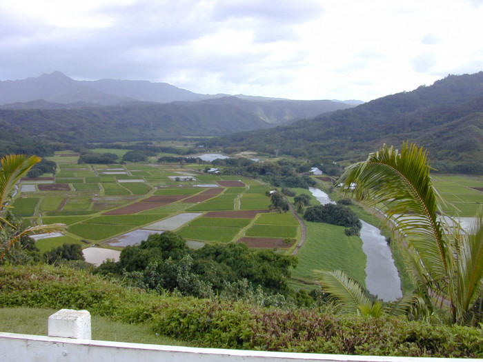"""3) Former President Bill Clinton dedicated the Hanalei River as an """"American Heritage River"""" in 1998, and approximately 60 percent of the state's taro is grown in the region surrounding the river."""