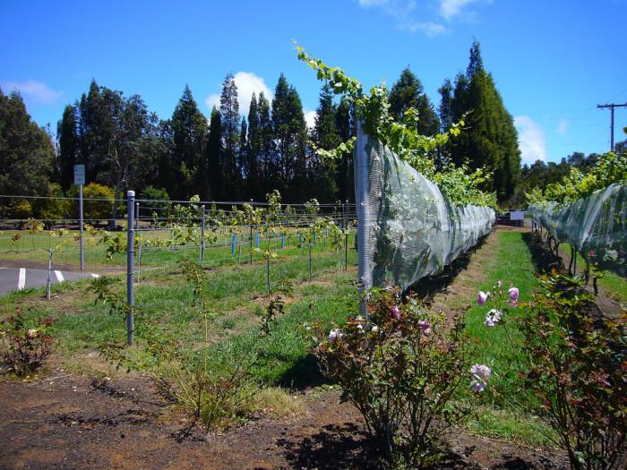 3) Volcano Winery