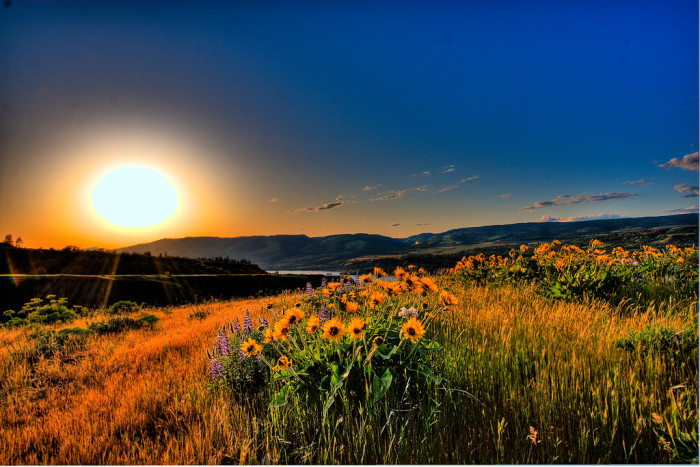 10) The sun and it's flowers.