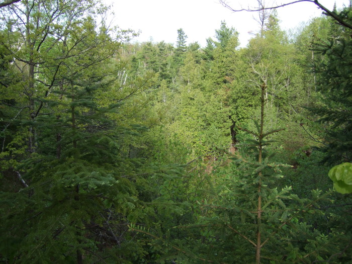 8. Fond du Lac State Forest