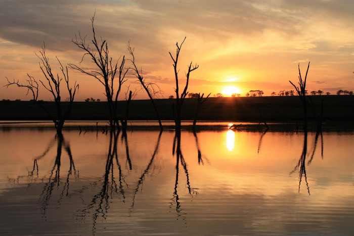 5. A setting sun gives these bare trees second lives in their reflections on the water.