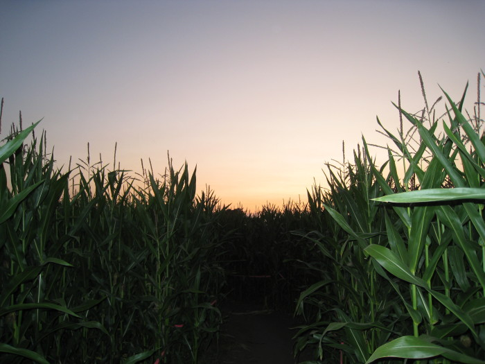 4. We're home to some of the best corn mazes around.