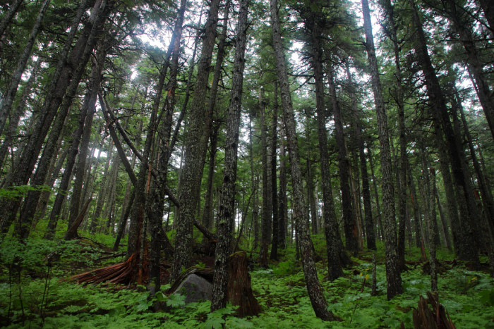 2) The emerald colors of an Alaskan Forest.