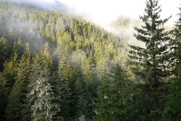 4) Extreme climate factors influence the forests of Alaska.