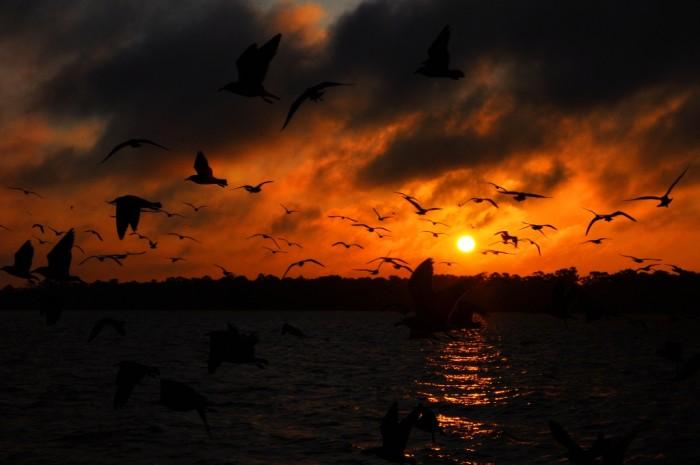 "2) ""Birds in an Orange Sunrise"" captured over Lake Houston by Theodore Scott."