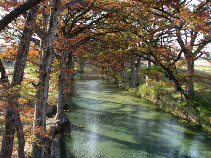 7) Such a peaceful setting of the cypress trees lining the Medina River near Bandera!