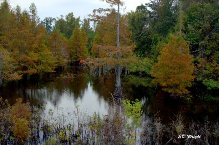 4. In Mississippi, even the swamps make for breathtaking views.