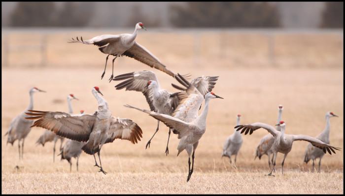 1. Watching the sandhill crane migration.