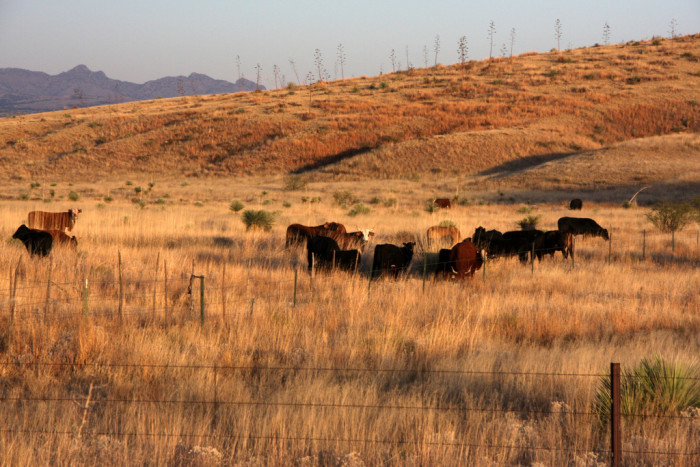 6. Cochise County