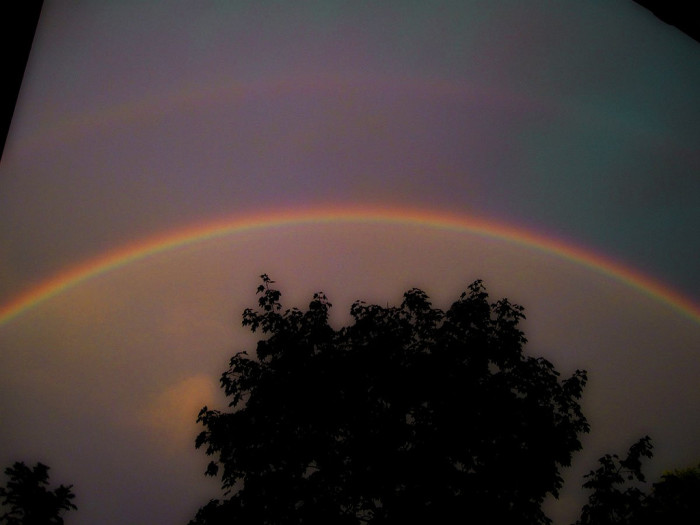3. An incredible double rainbow taken in Bloomington. I love the silhouette of the tree!