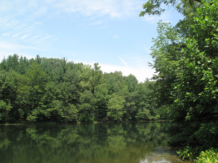 3. Morgan-Monroe State Forest