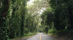 Don't Drive Down These 10 Haunted Roads In Hawaii Or You'll Regret It