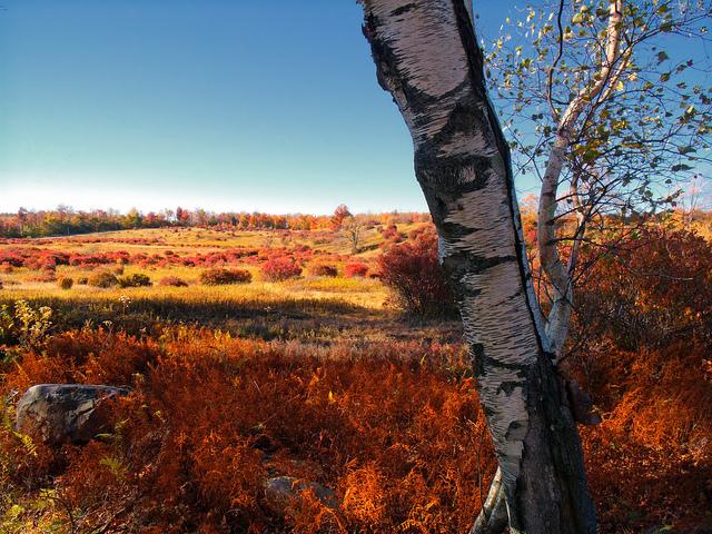 4. Ricketts Glen State Park