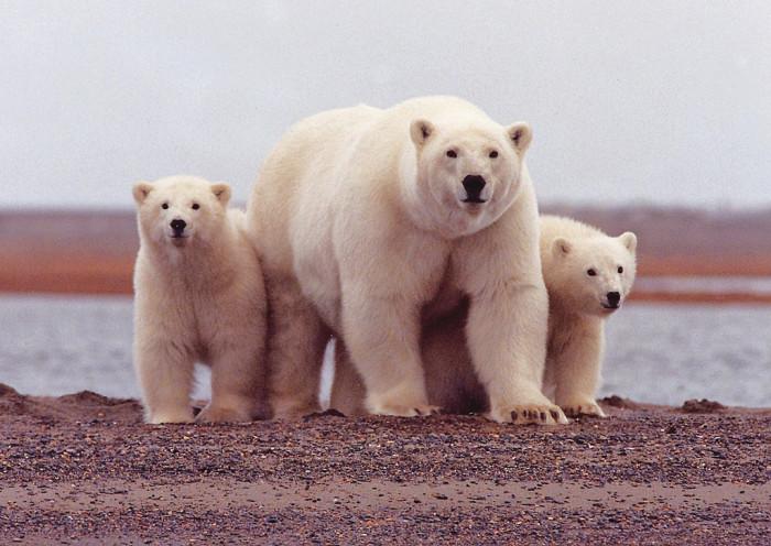5) Arctic National Wildlife Refuge