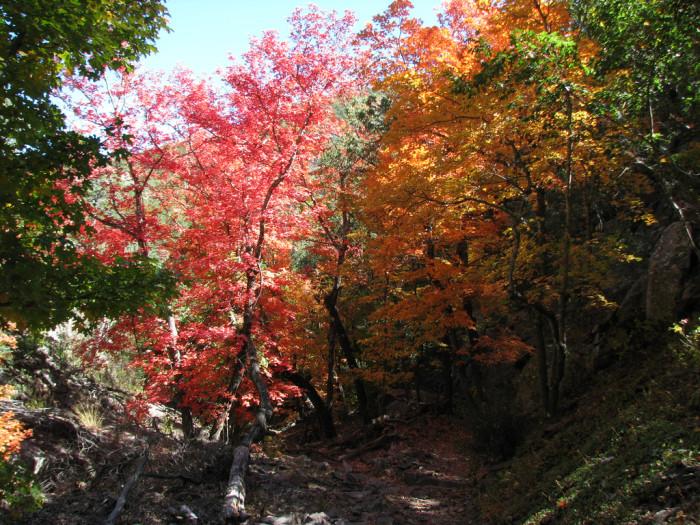 4) Big Bend National Park