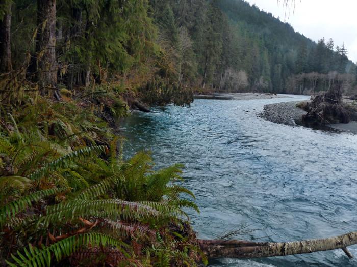 8. Hoh River