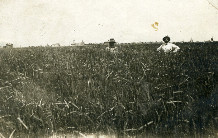 "5. ""Rye field near Stratton, Colo."""