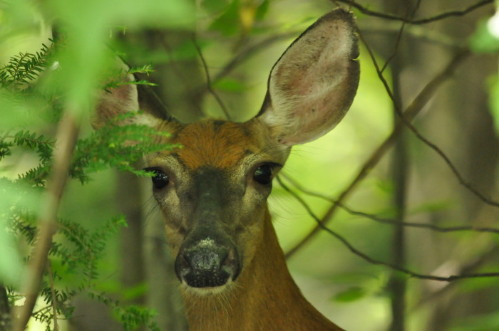 5) And this extremely close deer!