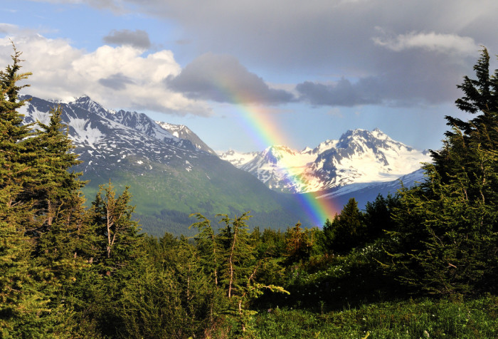 4) An elegant arrival touching down near Primrose Trail in the Kenai Peninsula.