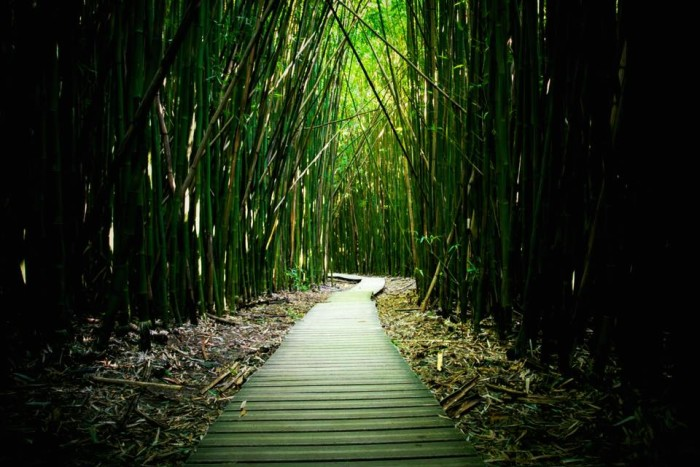6) Take a break from the stunning Pacific Ocean with this lovely photograph of a bamboo forest on Maui.