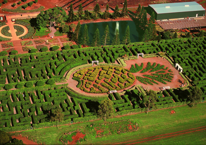 6) Get lost at the Dole Plantation Maze.