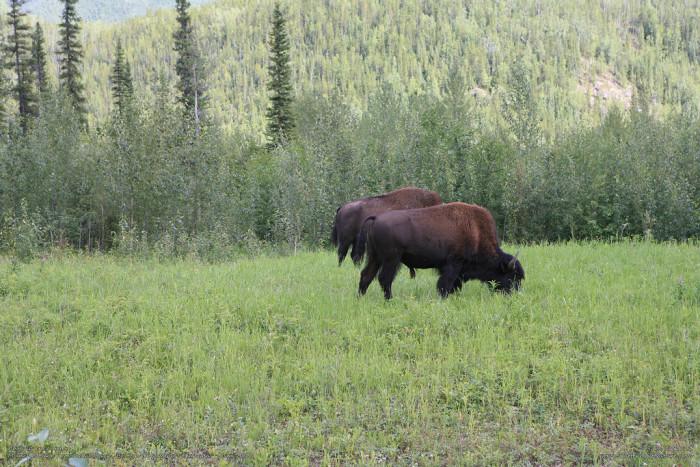 5) Alaska Range Buffalo Burger