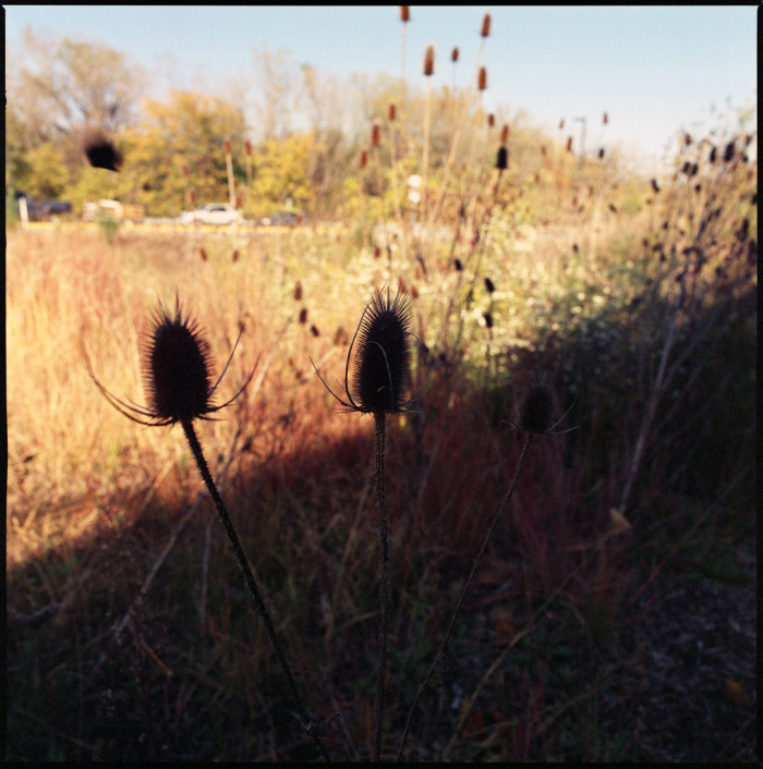 15. This one was taken in South Bend, Indiana. Who knew the sun could make weeds so pretty?