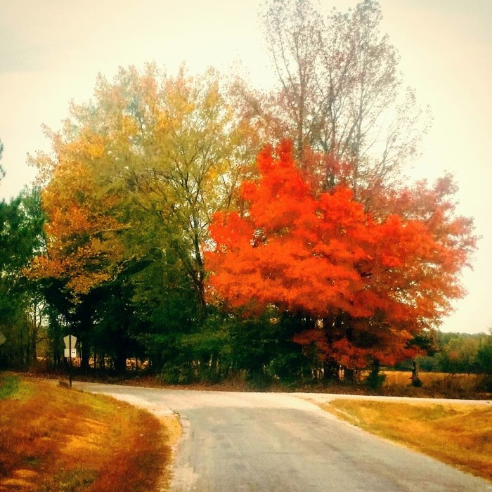 6. Fall has arrived in Pontotoc, bringing with it the beautiful colors of the season.