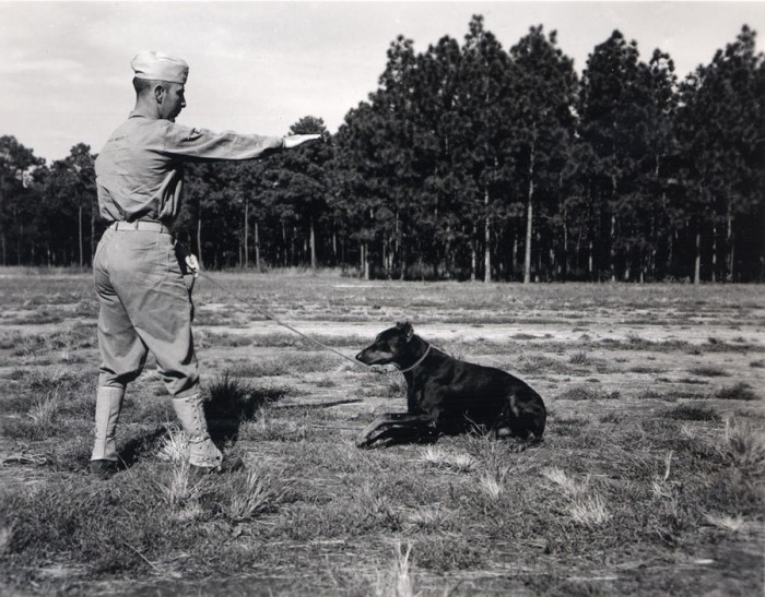 6. Cat Island, dogs, and World War II have more in common than many think.