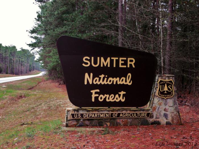 7. Sumter National Forest