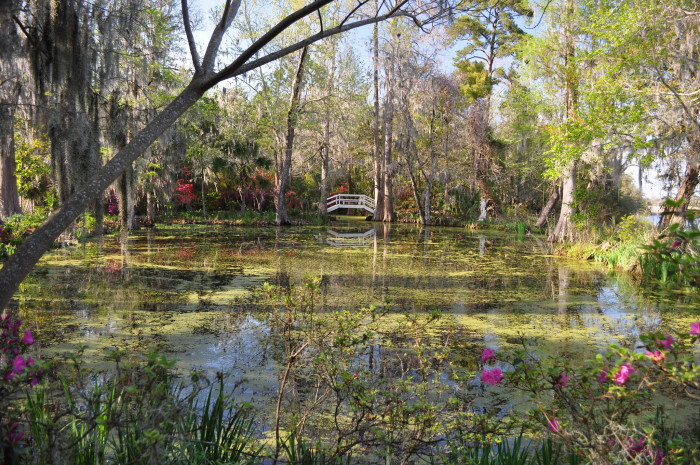 13. There would be no Magnolia Plantation gardens, which are the oldest public gardens in the nation, or