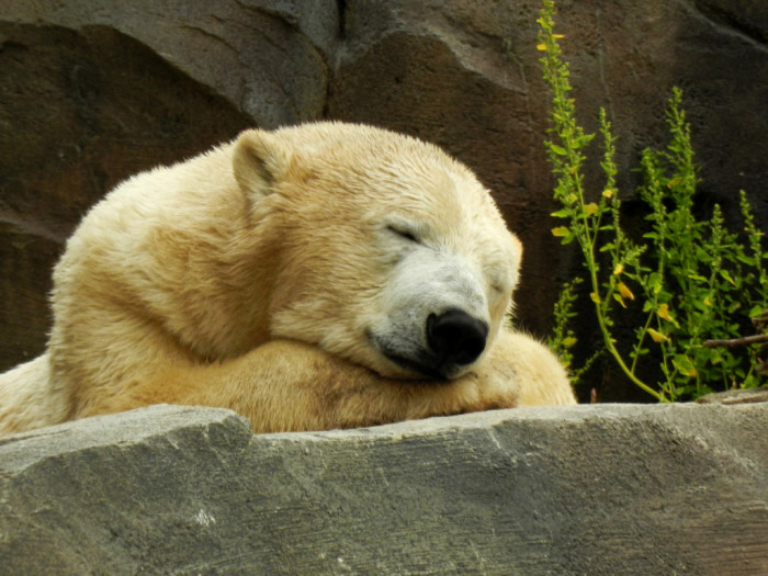 1) It's illegal to wake a sleeping bear for the sake of a snapshot.