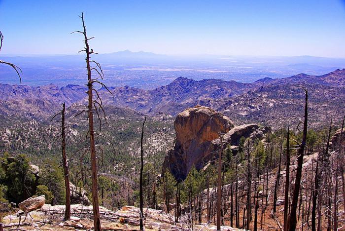 4. Mount Lemmon Trail #5, Coronado National Forest