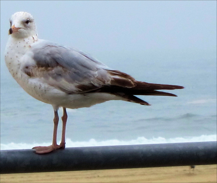 6. Gully - This is not a cute way of speaking about a seagull. Gully is used to describe someone who is gullible, overly authentic or genuine.