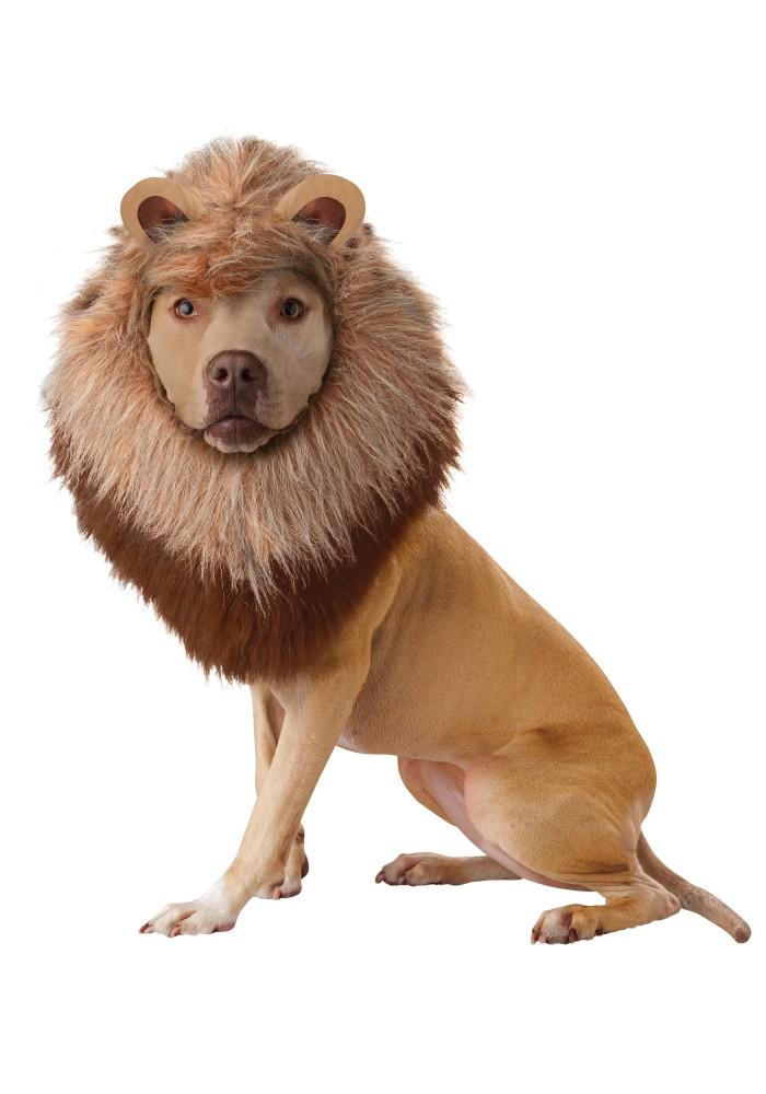 7. A Lion