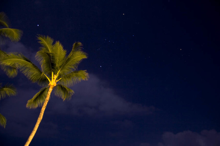 8) Could there be a more stunning shade of blue in this photograph of a palm tree near Kailua-Kona?