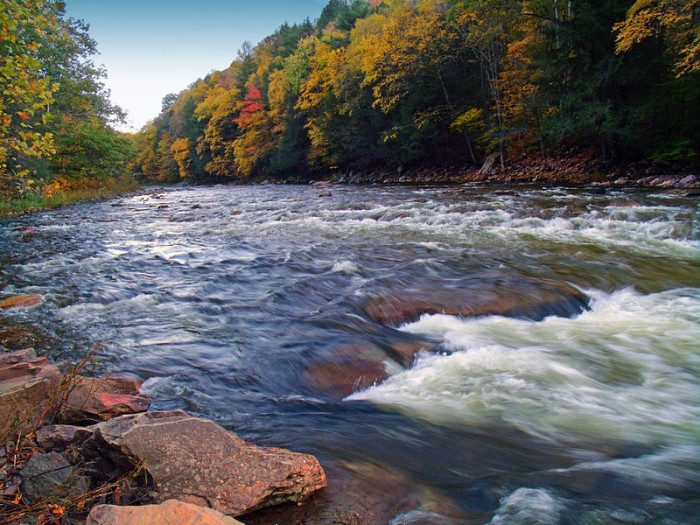 4. Loyalsock State Forest