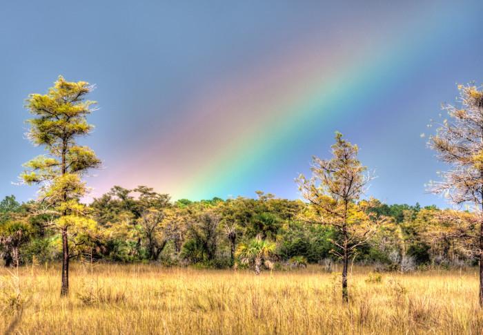 9. Big Cypress National Preserve, Ochopee