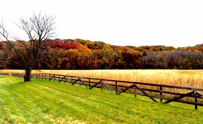 7. Bob Strickland took this photo of the beautiful fall foliage at the Sac Fox Trail.