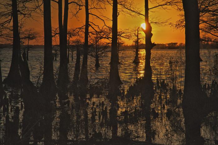 13. Lake Mattamuskeet
