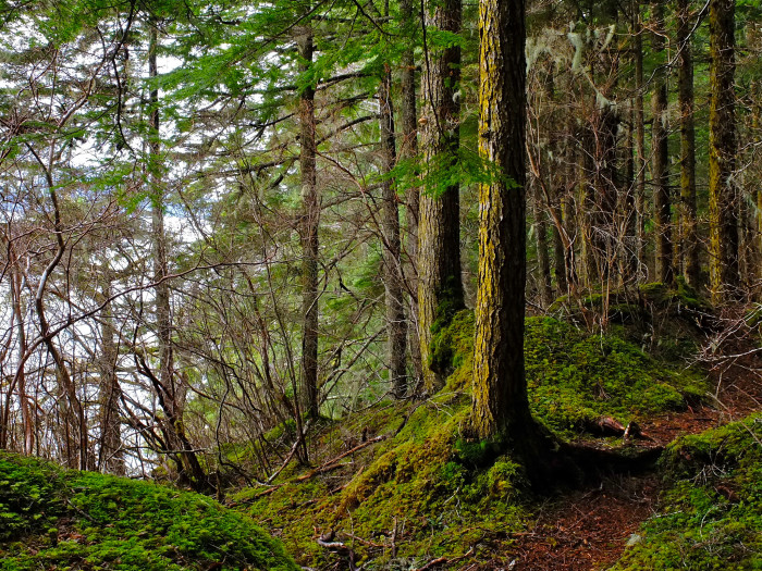 5) Alaska State Forests offer some of the best recreation around the state.