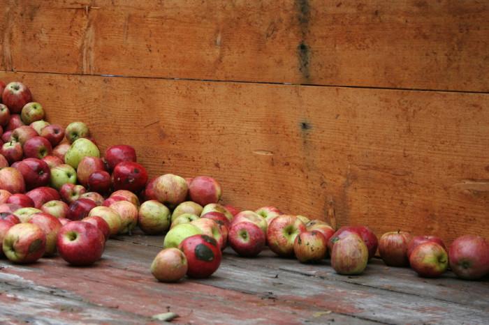 9) Apple cider is everywhere.