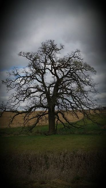 8. Kathy Schlumbohm shared this photo she took of a spooky looking tree, just in time for Halloween.