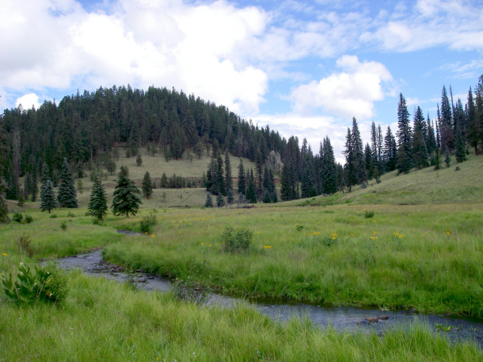 8. Thompson Trail #629, Apache-Sitgreaves National Forests