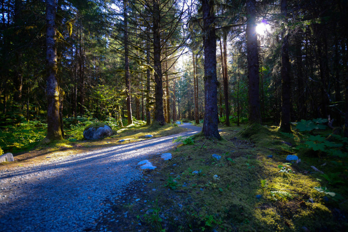 7) Beautiful trails can be found weaving their way through all of Alaska's State Forests.